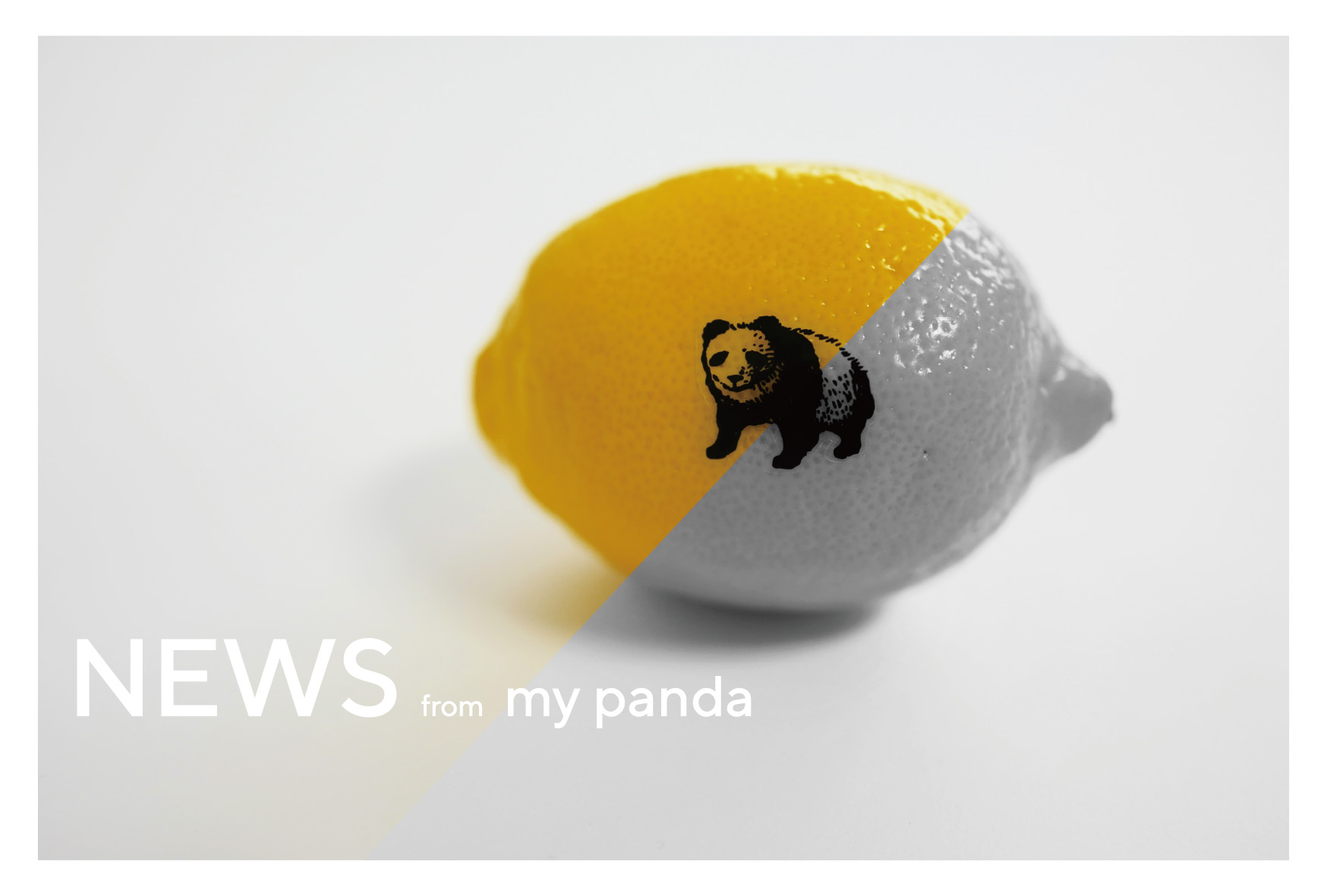 パンダ会員 登録開始のお知らせ